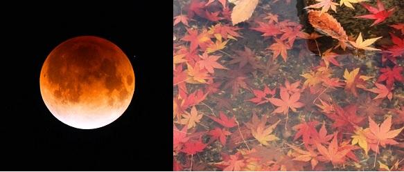 秋 皆既月食.jpg