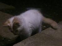 cat5.jpg