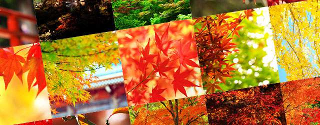free-photo-autumn-leaves-tn.jpg